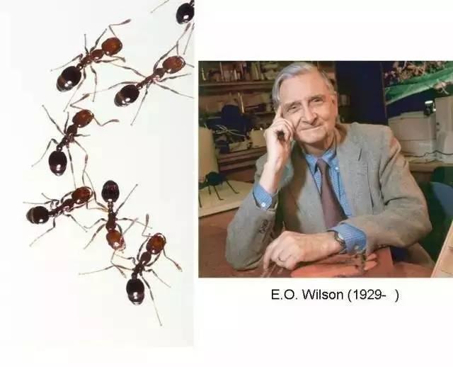 蚂蚁找路的故事   旧识新知