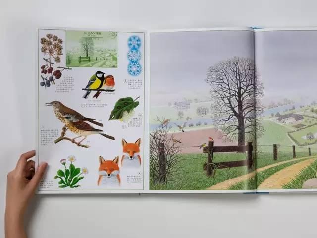 用最美的方式,向孩子介绍大自然