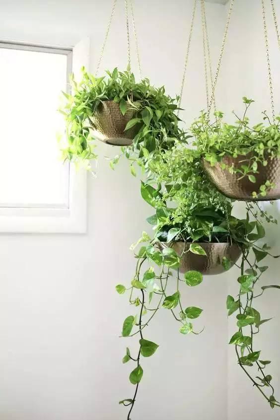 仅需1㎡,你家也能造个小花园!