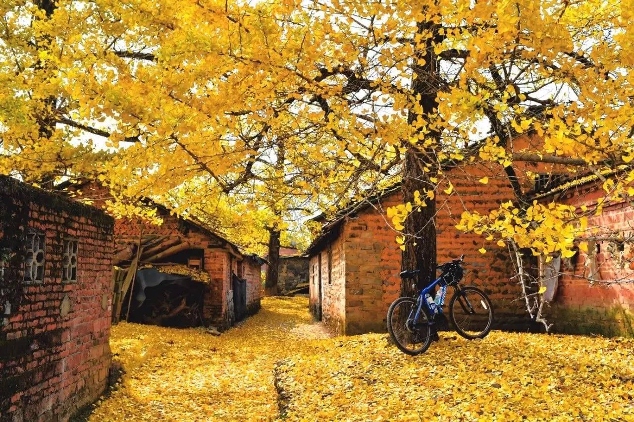 要去就去这6个国内鲜为人知,无污染的小众地,独揽秋天金黄美景!