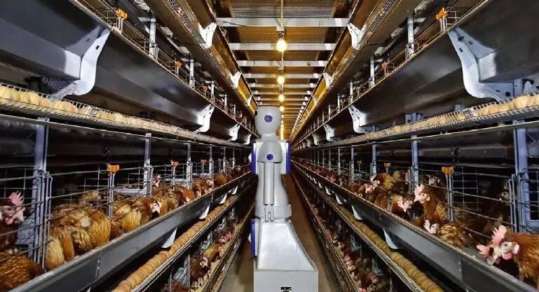 """养鸡界的新潮流:用聪明的""""机器人管家""""监控食品安全"""