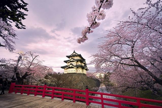 三生三世十里樱花,这是我们为您准备的2017日本赏樱全攻略
