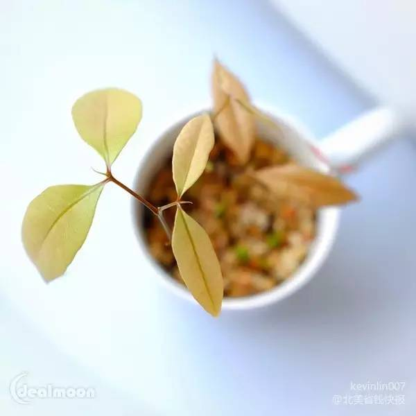 吃完水果籽别扔!简单几步教你养出超可爱的小盆栽!不用再花钱买!