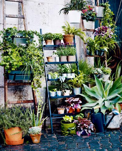 8种净化家居空间的绿色植物|净化你的家