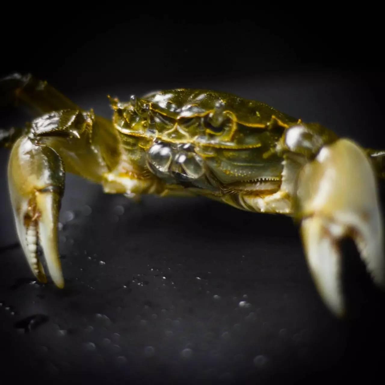 我敢打赌,90%的人连怎么吃螃蟹都不知道 | 深夜菜谱