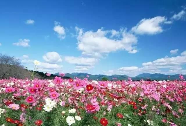 让孩子的心每天开出一朵花,才是最正确的教育方式