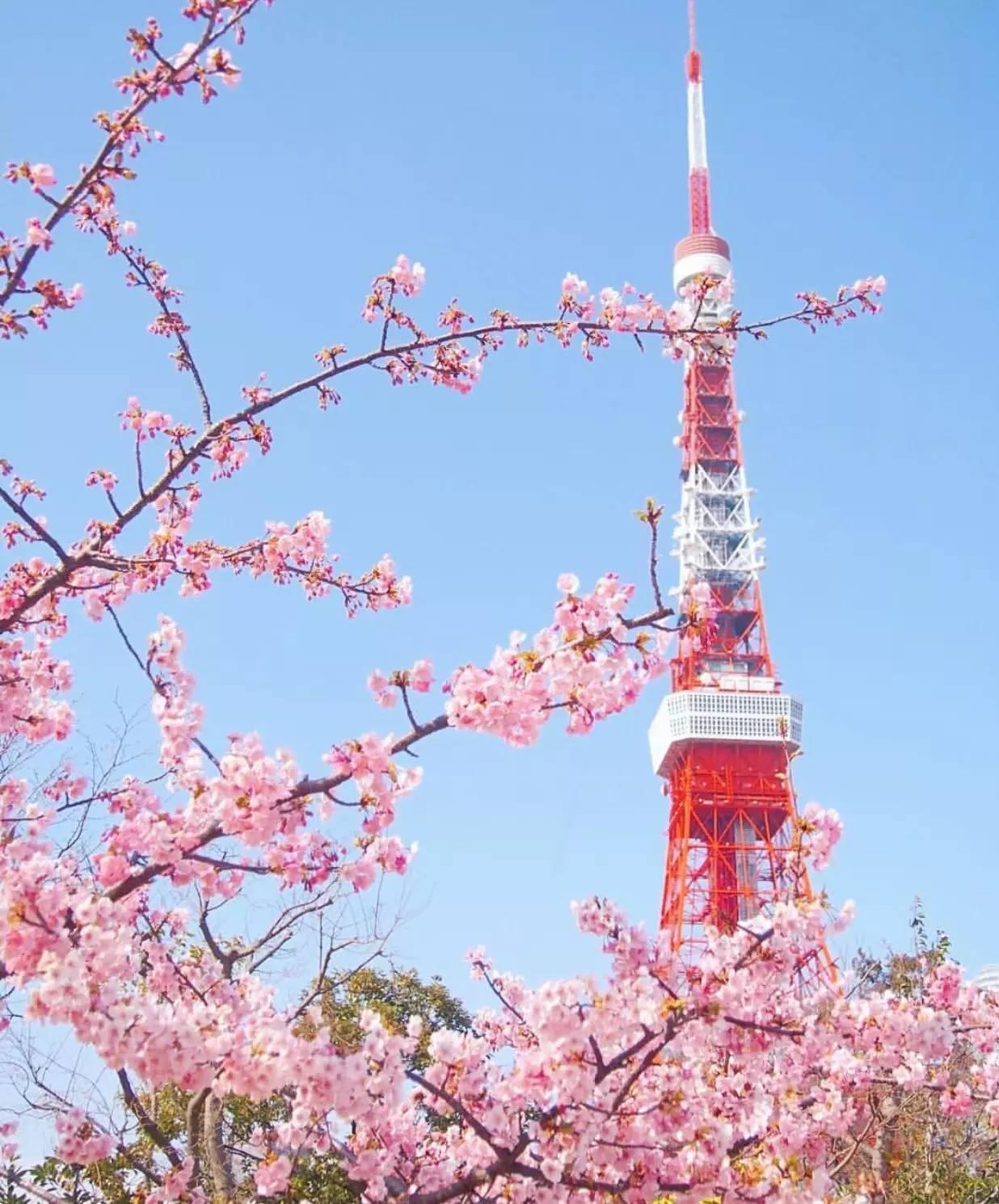 2017年日本樱花观赏指南,从南到北踩点去