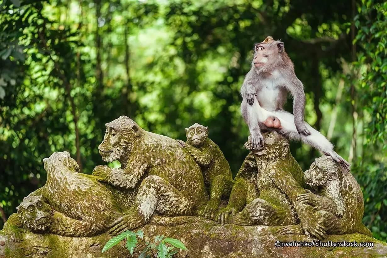 乌布,这个巴厘岛小镇凭何当选LP最受亚洲旅行者欢迎之地?