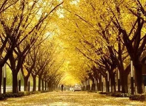 郁达夫:故都的秋