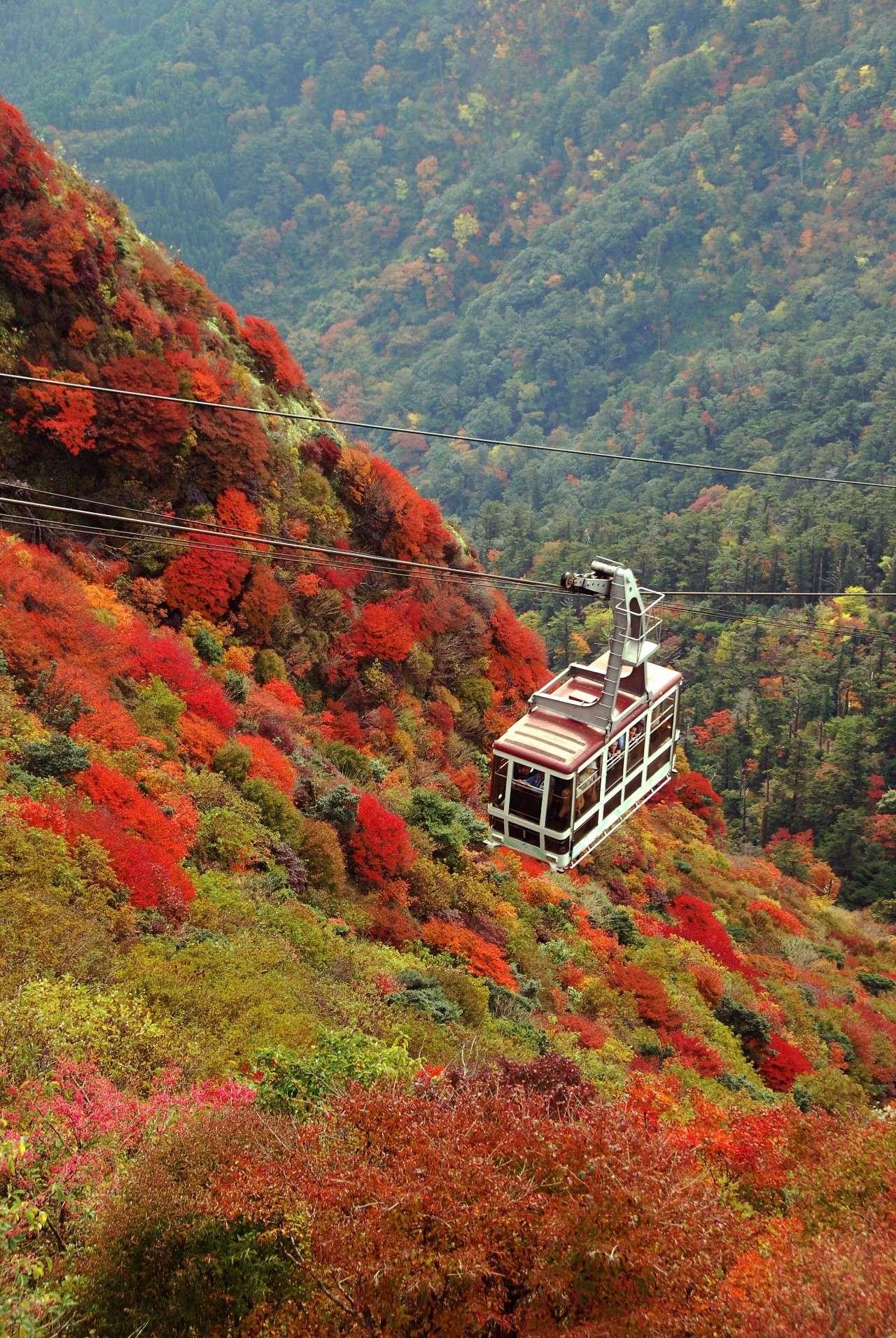 享私房红叶美景、皇室御用温泉旅馆、顶级餮宴,尽在九州醉美红叶之旅