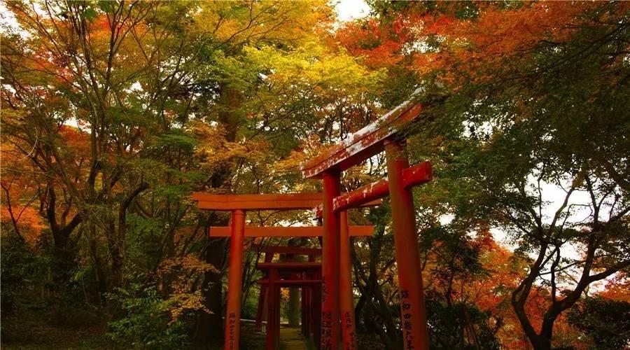 """日本最美的""""枫景""""不在京都,而在这里!"""