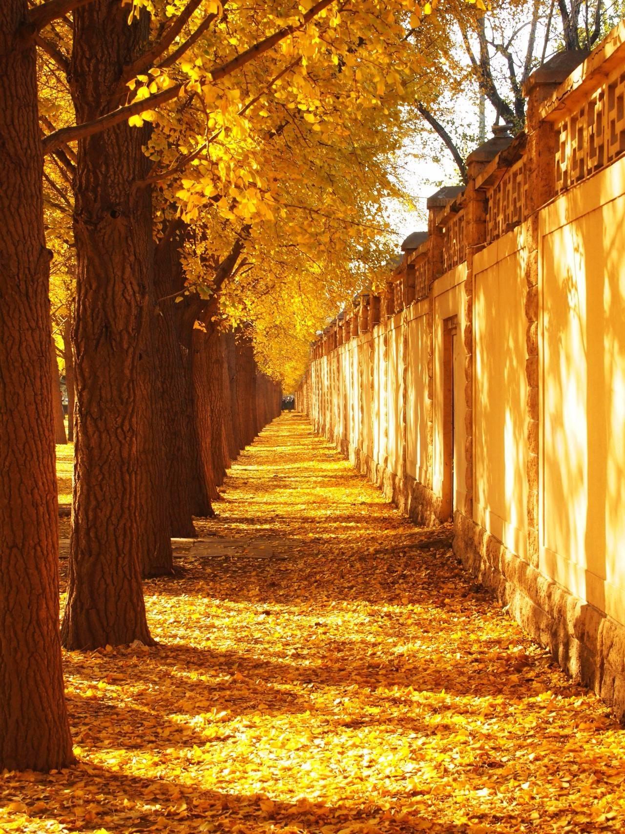 老舍:秋天一定要住北平