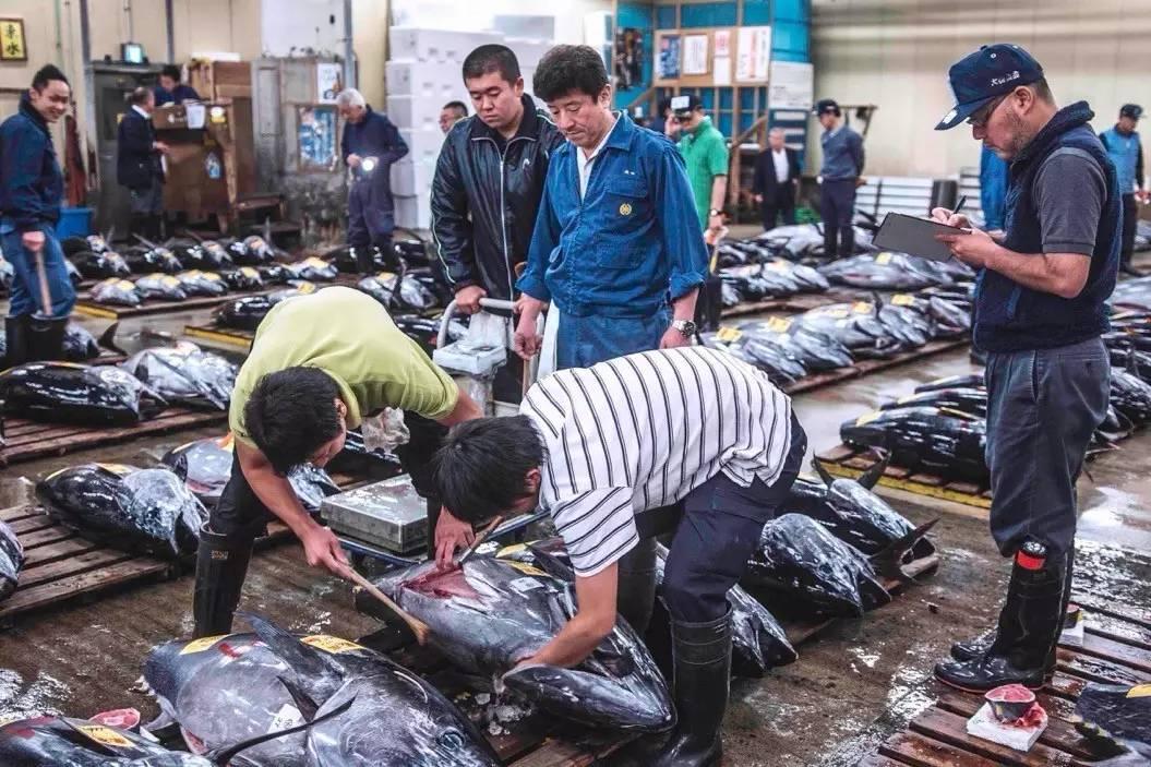 用一部东京筑地纪录片,向全球最顶级鱼市场告别