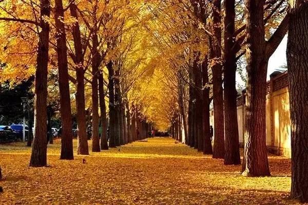 秋季诗意之旅:文人笔下的北平