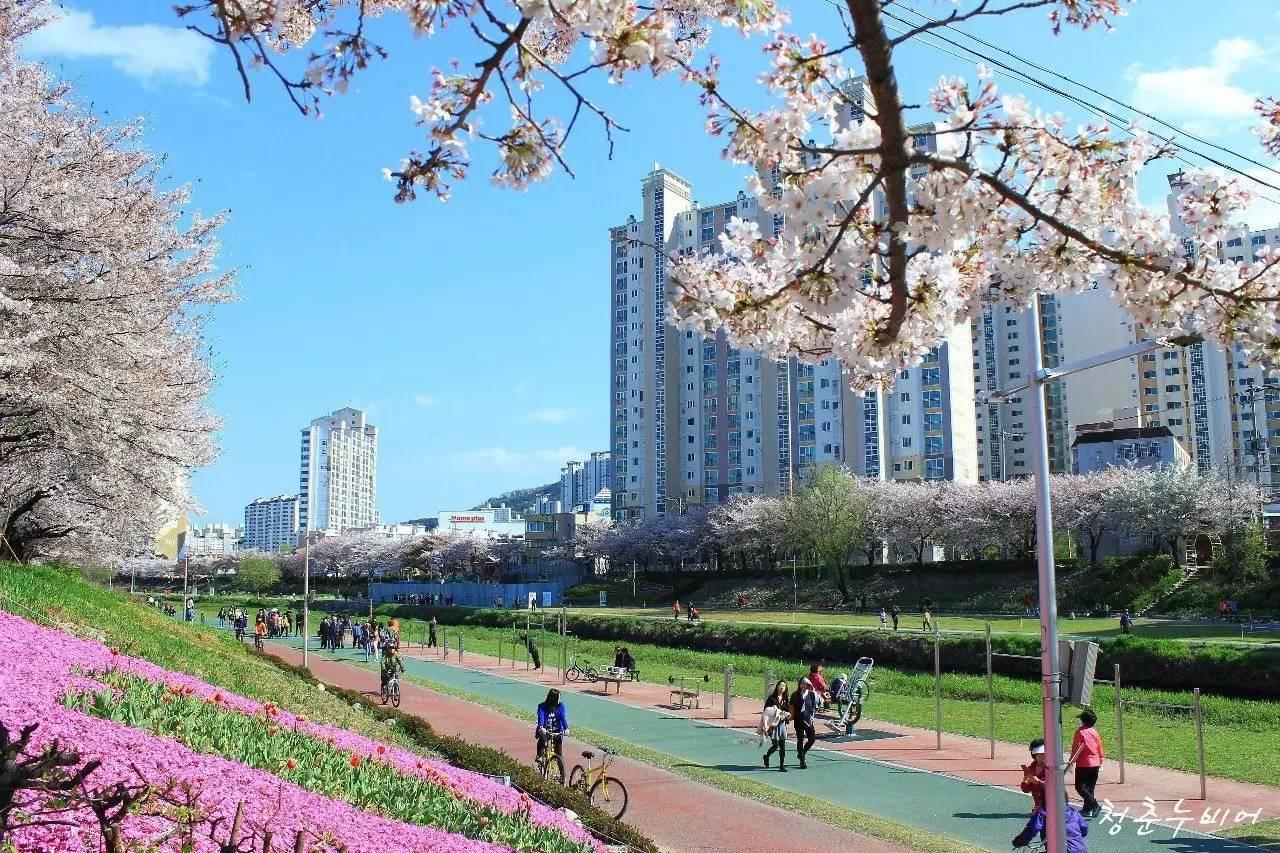 邮轮赏樱正当时,日韩3城人气樱花名所大公开!