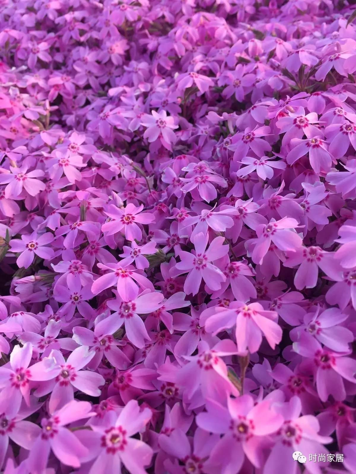 春暖花开,在花花草草里找配色灵感,好惊艳!