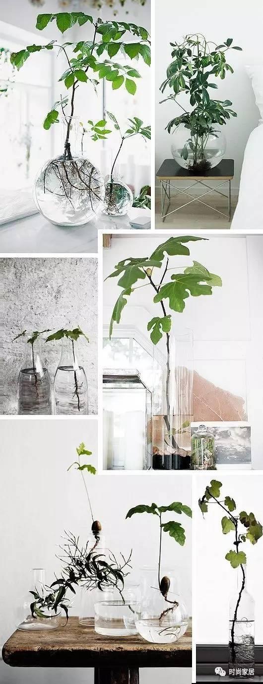 赶紧养一些水培植物吧,它们可是天然的加湿器!