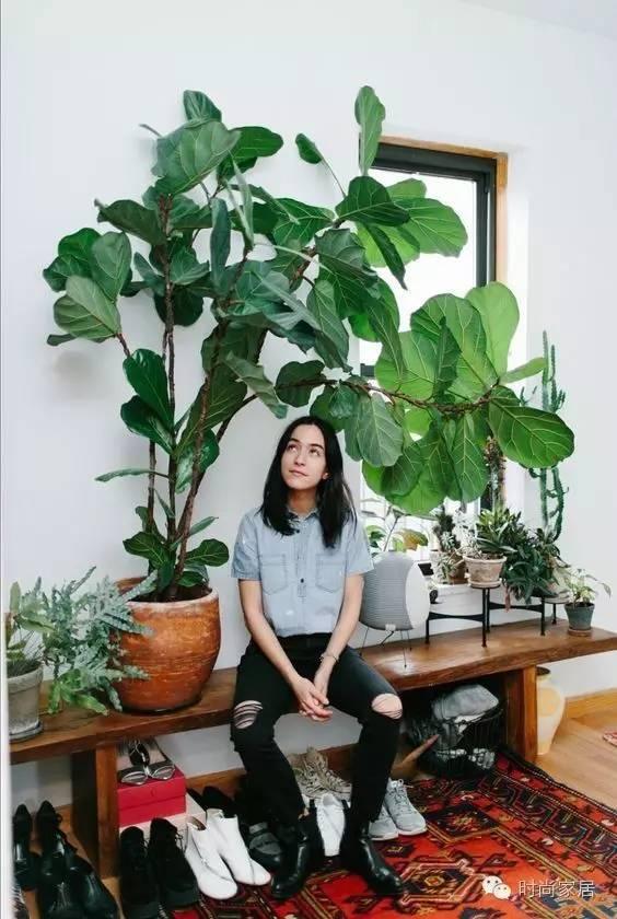 与植物相伴的日子,每一天都是诗