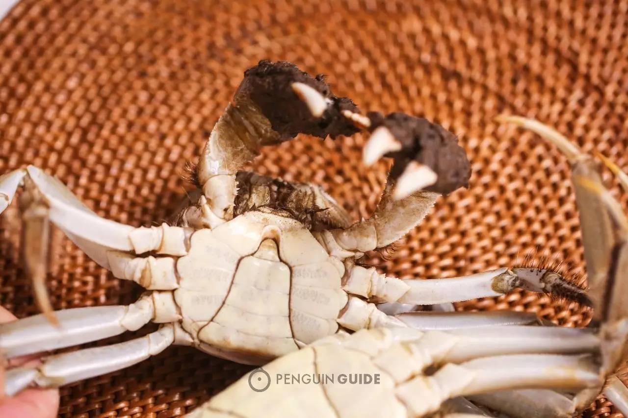 ▶️Holy Crab! 7个问题,搞定吃蟹