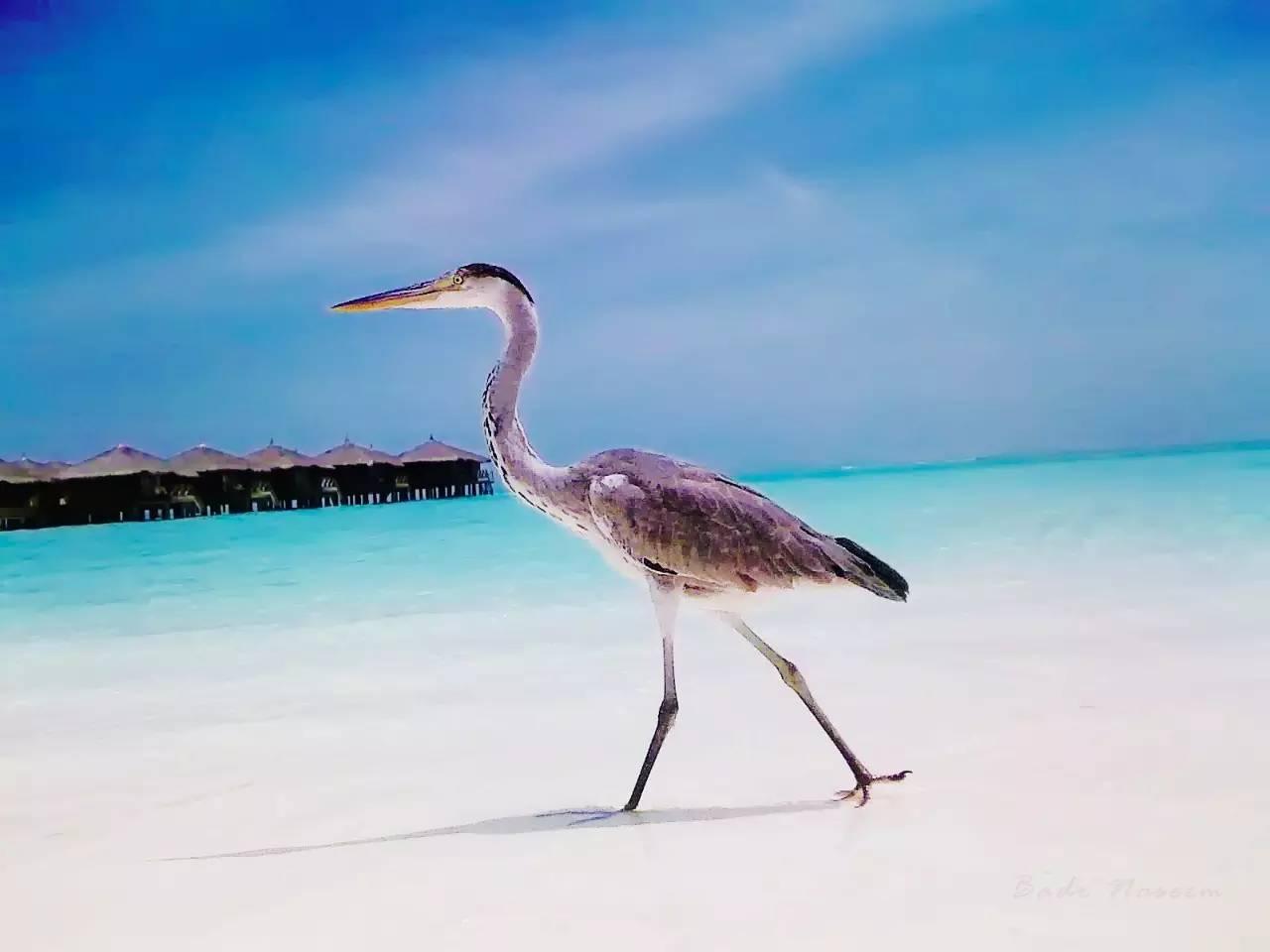 如何在度假村遍地的马尔代夫挑到一家最喜欢的?