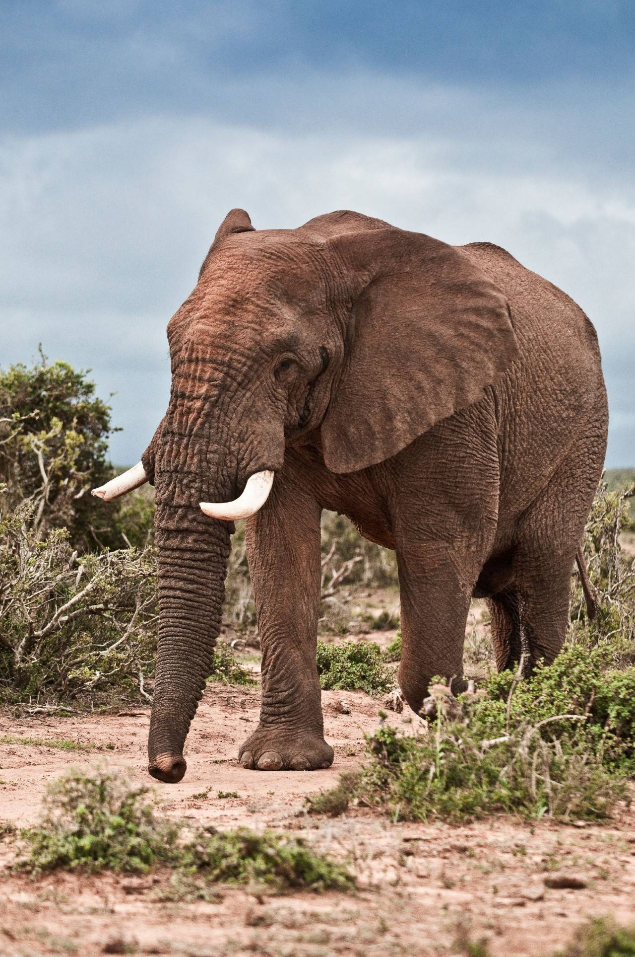 去南非一次收齐Big Five,你需要这份游猎指南