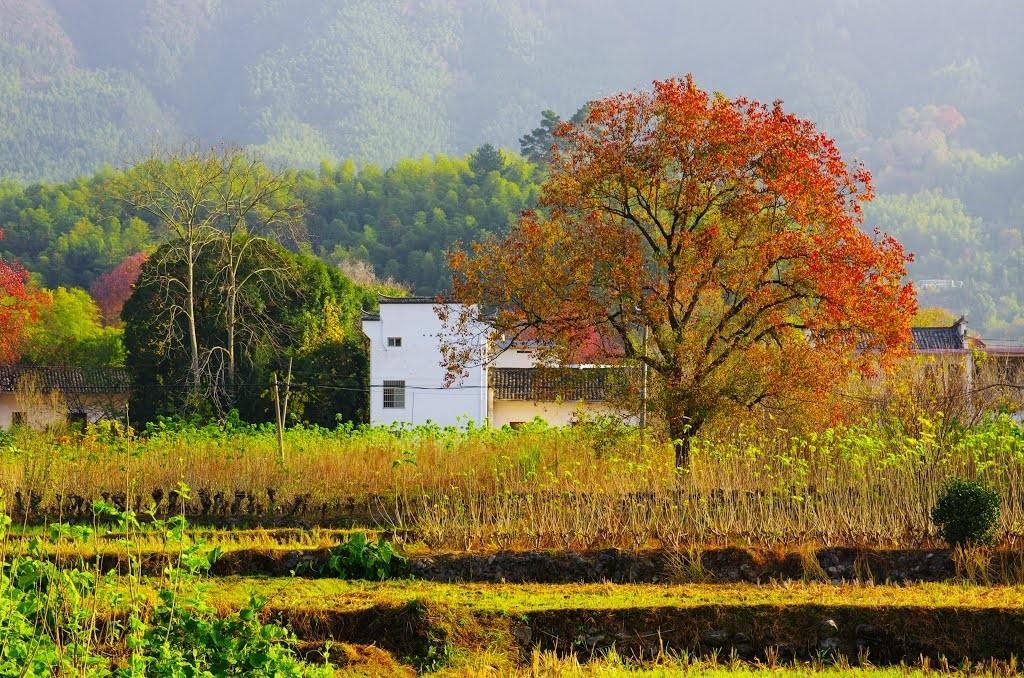 世人只知宏村,其实这里才是黄山最美村落!秋色媲美九寨沟,那儿的悦榕庄还有7折特惠!