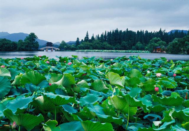 美哭了!中国最美五大湖,纳木错只排第三。