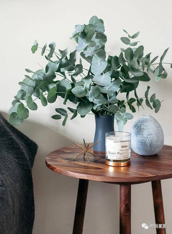 家里放束尤加利,颜值可碾压鲜花和绿植